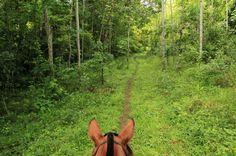 discovery horseback tour secondary forest   - Costa Rica