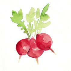 Small Radishes Archival print of watercolor painting in red and green , limited edition , fresh market, cottage chic. $21.00, via Etsy.