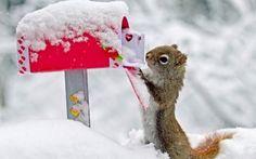 Romantischer Liebesbrief An Ein Eichhoernchen
