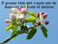 A genuine faith will expand into the blossoms and fruits of holiness.