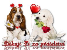 Labrador Retriever, Night, Advent, Animals, Labrador Retrievers, Animales, Animaux, Animal, Animais