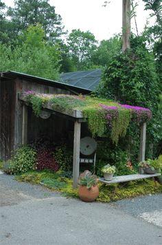 Green Roof Garden Saul Nurseries