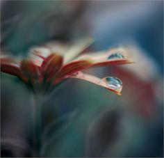 19 Beautiful Flower Photography