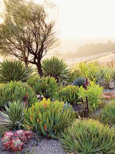 Garden: succulents, agave and poppies
