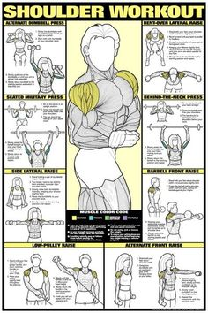 Shoulder workout infographic