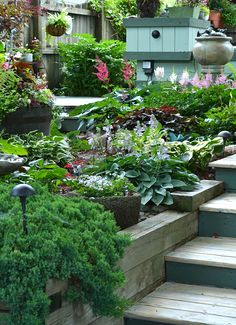 A natural slope combined with raised beds add interest to the Hamburg yard of Barb and Dave Whittemore. You can see their garden on the Buzz Around Hamburg Garden Walk and Open Gardens in summer 2015. Click back to the article for details.