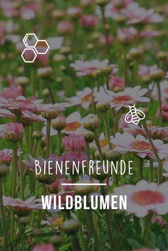Bienenfreunde: Wildblumen. Rettet Die Bienen! Wir Sagen Euch, Wie Ihr Euren  Garten