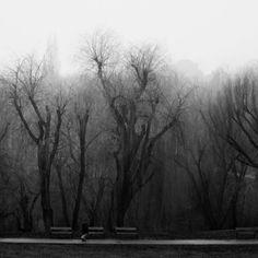 a heavy burden - by alexandra s. Crooked Tree, Heavy Burden, Martinis, Trees, River, Mood, Photography, Beauty, Photograph