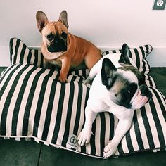 black and white vintage stripe dog bed from harry barker. #FrenchBulldogs #Frenchie