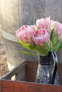 Proteas and pewter,very South African! Distinctive Celebrations by Wedding Concepts - South African Design. Proteas and pewter,very South African! Distinctive Celebrations by Wedding Concepts - South African Design. Flor Protea, Protea Art, Protea Flower, My Flower, Flower Power, Protea Bouquet, Deco Floral, Arte Floral, Ikebana
