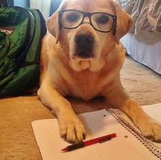 I can't believe you're asking me to write your paper. I'm just a dog....