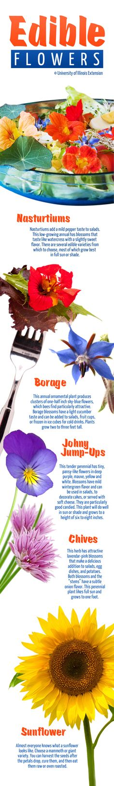 Here are 5 common, edible flowers! Great for adding interest, flavor, & color to salads.