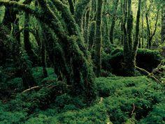 Parque Nacional Queulat  Región de Aysén del General Carlos Ibáñez del Campo .