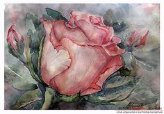 Поэтапное рисование акварелью розы. Фото №1