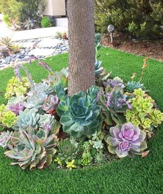 Garden Landscaping 47 Enchanting DIY Vertical Planter 47 Enchanting DIY Vertical Planter Such A Dreamy Garden Of Succulents Gardening Succulents Succulent Landscaping, Succulent Gardening, Front Yard Landscaping, Planting Succulents, Easy Landscaping Ideas, Succulent Garden Ideas, Succulent Tree, Succulent Outdoor, Succulents Diy