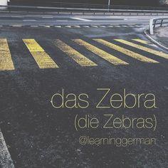 das Zebra #German #Deutsch