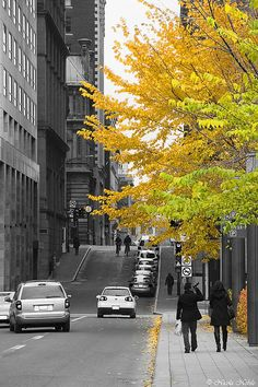 ✮ Late autumn street photo in Old Montreal