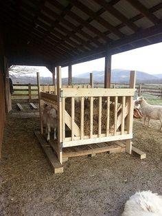 The Goats' new round bale feeder that John built. Has a gate at one