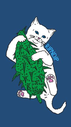 RIP n DIP white cat w/middle finger Wallpaper