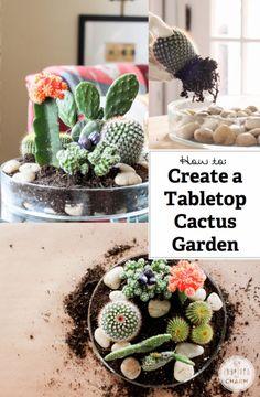 How to Make a Tabletop Cactus Garden