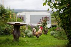 maud the caravan, and the family chickens in the garden