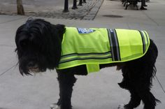 Darrin modeling  Royal Animals Offical NYPD mesh vest with NYPD patch  pocket in front as well as reflective stripes