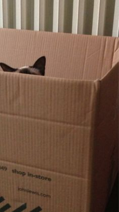 Ollie Gervais in a box.......