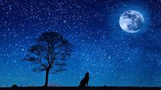 Dog, Wolf, Yelp, Moon, Tree, Night