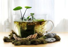 Here's what you will need for your very own table-top water garden:   - A glass container, bowl, wide-mouth vase etc. - Water plants such as taro, water lettuce, water hyacinth, duck weed, fairy moss etc. - Plastic pots shorter than the height of your glass vessel - Assorted rocks - Potting soil  - Charcoal bits - Mosquito fish (optional) - Pure water