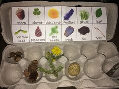 Nature Hunt- Egg Carton This printable fits perfectly into the top of an egg carton encouraging children to find and collect 12 different items from nature! Encourage children to decorate the egg carton first to make it their own! Forest School Activities, Nature Activities, Outdoor Activities For Kids, Outdoor Learning, Summer Activities, Preschool Activities, Camping Activities, Outdoor Scavenger Hunts, Nature Scavenger Hunts