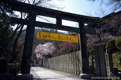 Cherry blossoms at Konpira-san (Kagawa Prefecture, Shikoku).