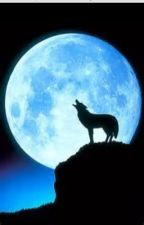Moonlight Moon Moon pictures and Beautiful moon Moon Moon, Blue Moon, Moon Time, Shoot The Moon, Howl At The Moon, Image Nature, Moon Pictures, Wolf Spirit, Tatoo Art