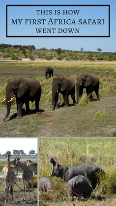 This is how my first Africa safari went down - Global Introvert