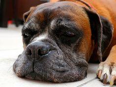 Reuma kutyáknál: okok, tünetek és kezelés