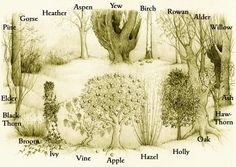 The Ogham Grove is formed of the twenty traditional ogham trees placed in their correct sequence. READ: http://www.yurileitch.co.uk/id64.html