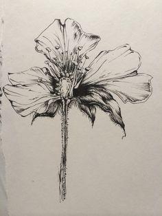 Detailed drawing, Sarah Simblet style