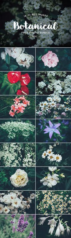 Collection of 16 free hi-res botanical photos. The set contains photos of garden, meadow and tree fl Icon Set, Meadow Garden, Retro Logos, Gardening, Flower Photos, Photo S, Creative, Free, Graphic Design