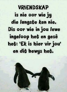 Afrikaanse Quotes, Like You, Sayings, Memes, Friends, Amigos, Lyrics, Animal Jokes, Word Of Wisdom