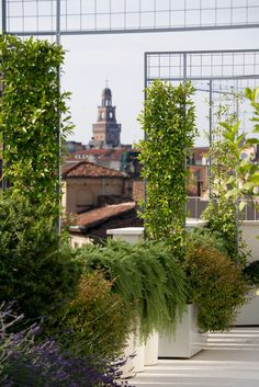 Milano - could grow fruiting vines over the frames