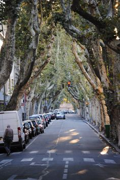 On the way to Avignon. Notice the traffic going IN. I loved seeing the rows of plane trees lining the street. This is typical along many roads in France. Belle France, France 3, Provence France, South Of France, Places To Travel, Places To See, Paris, Chateauneuf Du Pape, Languedoc Roussillon