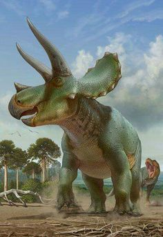 prehistoric creatures Triceratops by : Classification Rgne Animalia Classe Sauropsida Ordre Ornithischia Sous-ordre Marginocephalia Super-famille Ceratopsia Famill Prehistoric Wildlife, Prehistoric Dinosaurs, Prehistoric World, Dinosaur Fossils, Dinosaur Art, Prehistoric Creatures, Dinosaur Crafts, Reptiles, Mammals
