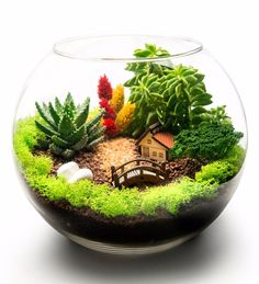 What is terrarium? Heres the answer to all What is terrarium? Here's the answer to all What is terrarium? Terrarium Diy, Terrarium Scene, Glass Terrarium, How To Make Terrariums, Succulent Gardening, Planting Succulents, Container Gardening, Organic Gardening, Indoor Gardening