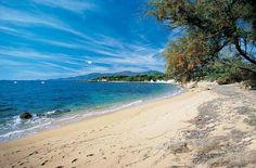 Le Maquis - Corsica
