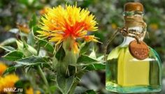Benefícios do óleo de cártamo na dieta de emagrecimento