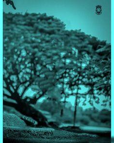 Blur Image Background, Background Wallpaper For Photoshop, Desktop Background Pictures, Blur Background Photography, Photo Background Editor, Light Background Images, Editing Background, Picsart Background, Natural Background