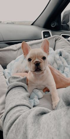 """Excellent """"bulldog puppies"""" detail is readily available on our internet site. Cute French Bulldog, French Bulldog Puppies, Cute Dogs And Puppies, Doggies, French Bulldogs, English Bulldogs, Cute Little Animals, Cute Funny Animals, Cãezinhos Bulldog"""