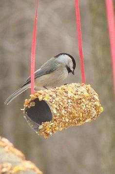 Plus de 1000 id es propos de mangeoire oiseau sur - Mangeoire pour oiseaux a faire soi meme ...