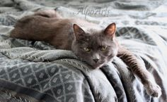 cute cat picture by AlpoArts on Etsy