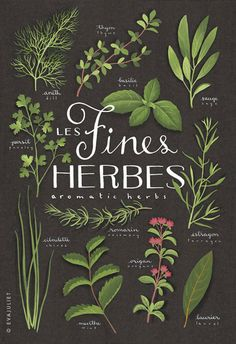 via Eva Juliet To me, herbs are always beautiful, no matter what one does with them!
