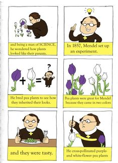 AP Bio project about Mendelian Genetics traditional ink, digital color/text guh Gregor Mendel was adorable Gregor Mendel page 1 Biology Lessons, Science Lessons, Teaching Science, Life Science, Science Projects, Teaching Resources, Middle School Science, School Fun, School Ideas